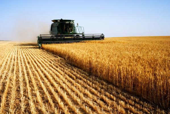Урожай пшеницы в Канаде будет самым низким за последние пять лет
