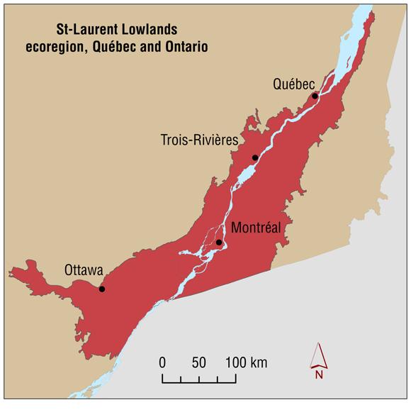 StLaurent Lowlands