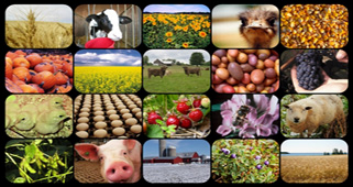 a mosaic of agriculture related images