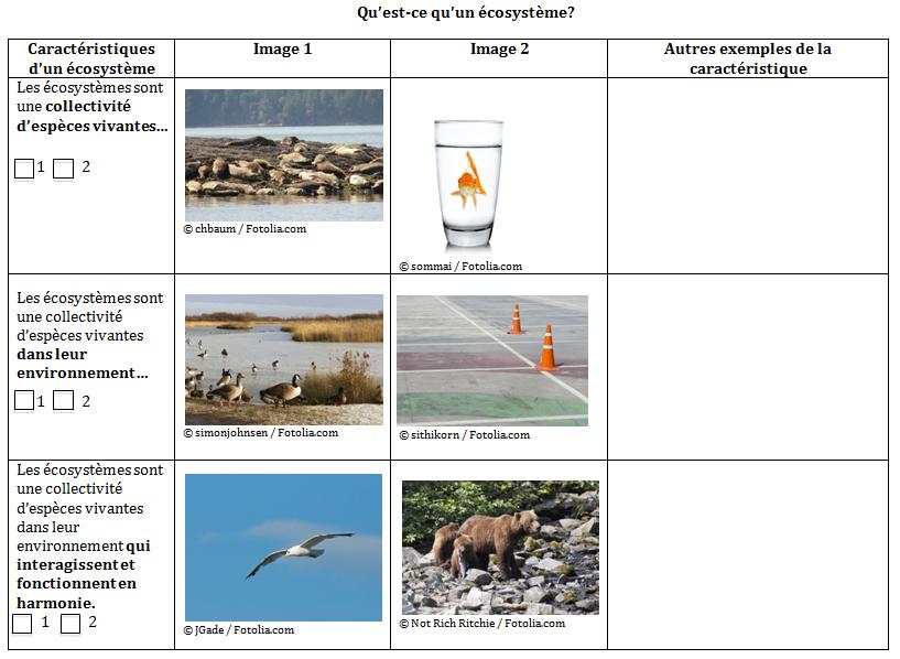 Leçon No 1 Questce Quun écosystème