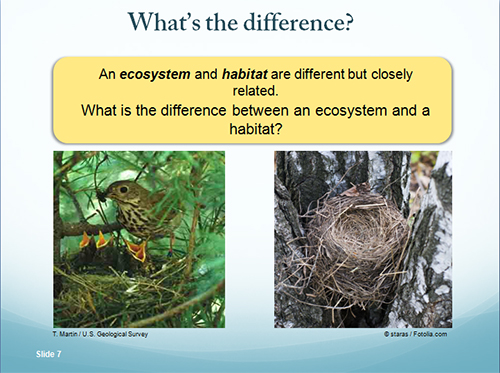 Lesson #1 What is an ecosystem?
