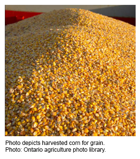 Photo depicts harvested corn for grain. Photo: Ontario agriculture photo library.